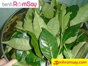 Lá trà xanh được người việt coi là thần dược trong trị bệnh về da cho bé đặc biệt là rôm sảy - Trị rôm sảy bằng lá trà xanh
